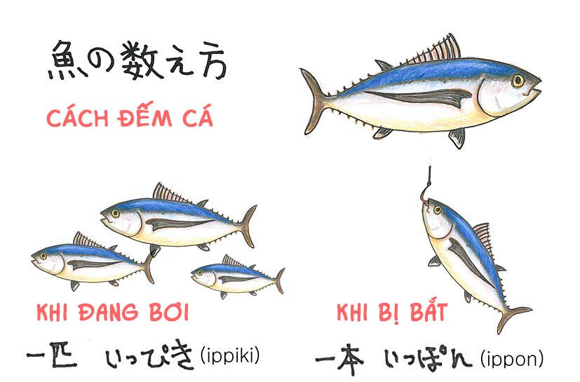 Cách đếm đồ vật trong tiếng Nhật